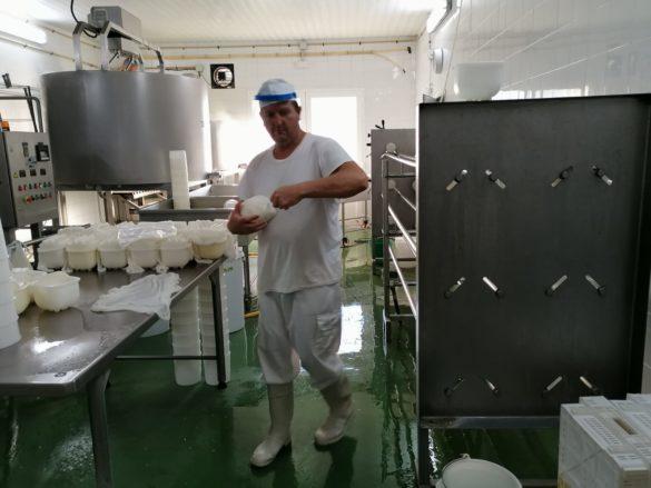 Formatges Burguera: vaques, llet, formatges   Fet a Campos!