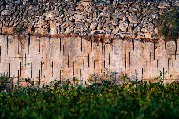 Dalt Turó: vins d'altura | Fet a Campos!