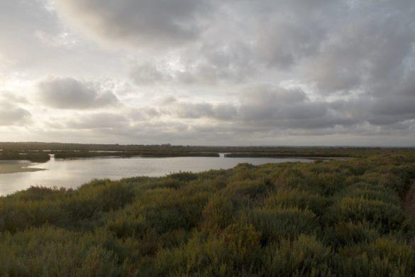 Salines d'Es Trenc: on floreix la sal | Fet a Campos!